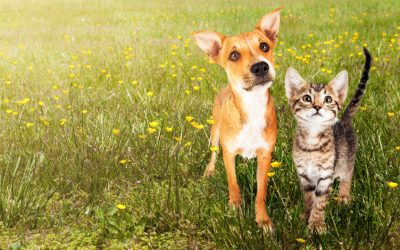 Seniors, have you considered adding a cat to your dog-friendly household?