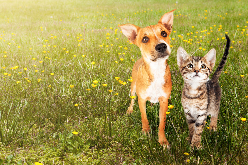Dog and cat in a field of flowers